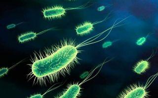 Пути передачи менингита и как его распознать