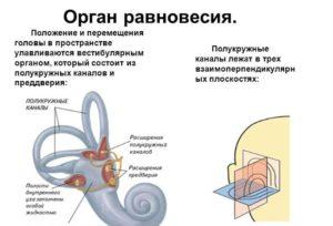 орган равновесия при головокружении