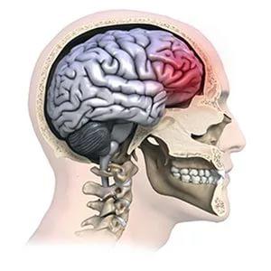 зона ушиба при травме головы